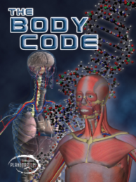 The Body Code, Human Skeleton Human muscles